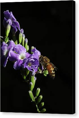 Honeybee On Golden Dewdrop Canvas Print by Richard Rizzo