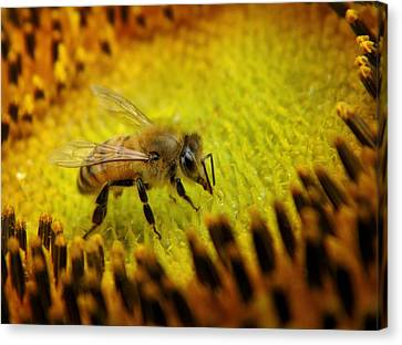 Canvas Print featuring the photograph Honeybee On Sunflower by Chris Berry