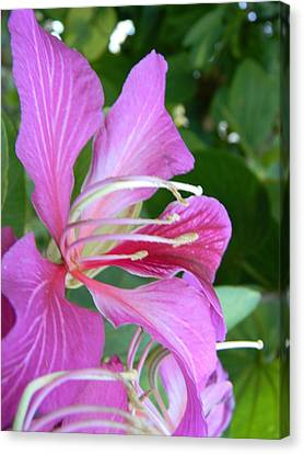 Hong Kong Orchid In Lakeland Canvas Print by Warren Thompson