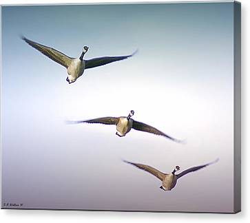 Honk If You Love Flying Canvas Print by Brian Wallace