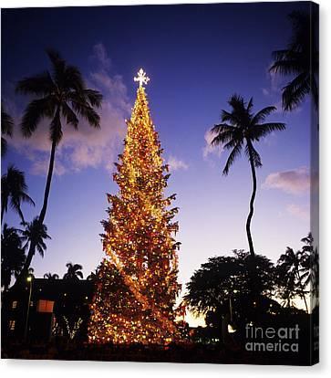 Honolulu Christmas Canvas Print by Kyle Rothenborg - Printscapes