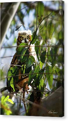 Hoo Goes There? Canvas Print