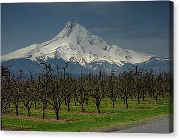 Hood Orchard Canvas Print