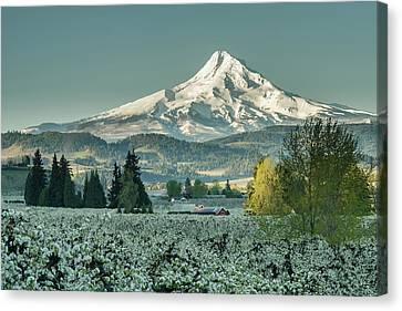 Hood River Valley In Spring Canvas Print