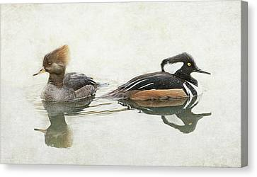 Canvas Print featuring the photograph Hooded Mergansers by Angie Vogel