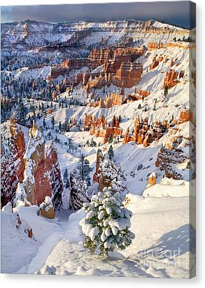 Canvas Print featuring the photograph Hoodoos And Fir Tree In Winter Bryce Canyon Np Utah by Dave Welling