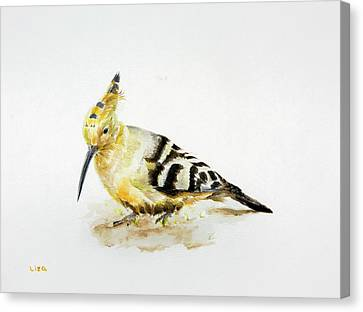 Hoopoe Canvas Print by Liza Gonen