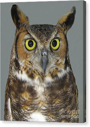 Canvas Print featuring the photograph Hoot-owl - I'm Looking At You by Merton Allen