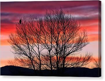 Kathleen Canvas Print - Hoot Owl Sundown by Kathleen Bishop