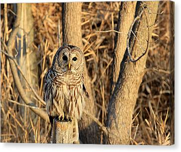 Hooter Canvas Print by Thomas Danilovich