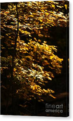 Hope Leaves Canvas Print by Linda Shafer