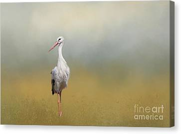 Hope Of Spring Canvas Print