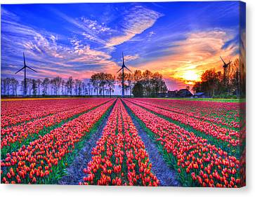 Hope Of Spring Canvas Print by Midori Chan