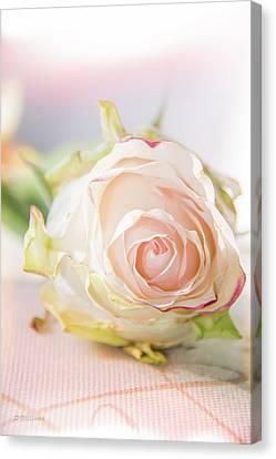 Hope Rose Canvas Print