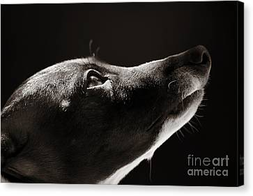 Canvas Print featuring the photograph Hopeful by Angela Rath