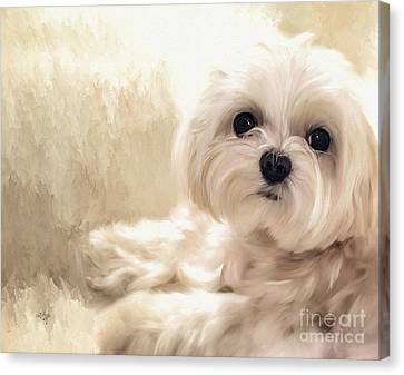 Maltese Canvas Print - Hoping For A Cookie by Lois Bryan