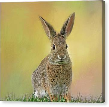 Canvas Print featuring the photograph Hoppy Spring by Donna Kennedy