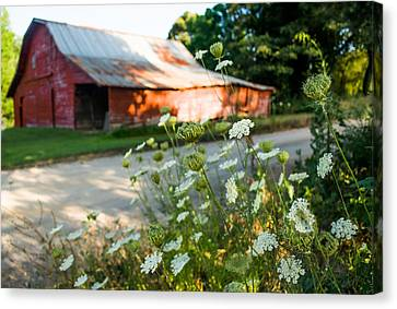 Old Country Roads Canvas Print - Horizontal Queen Anne's Lace by Parker Cunningham