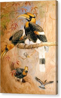 Toucan Canvas Print - Hornbill  by Joseph Wolf