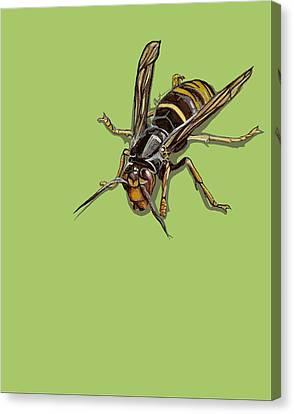 Hornet Canvas Print by Jude Labuszewski