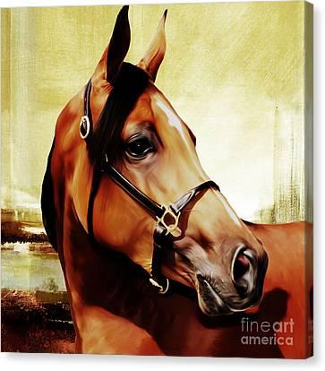 Horse # 341 Canvas Print
