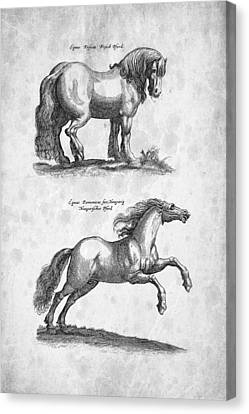 Horse 03 Historiae Naturalis 1657 Canvas Print by Aged Pixel