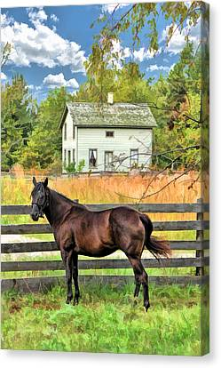 Horse And Barn At Old World Wisconsin Canvas Print