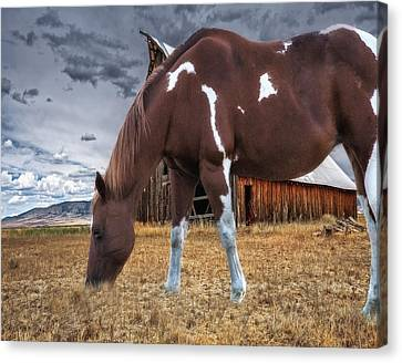 Barn Storm Canvas Print - Horse And Barn by Dennis Adams
