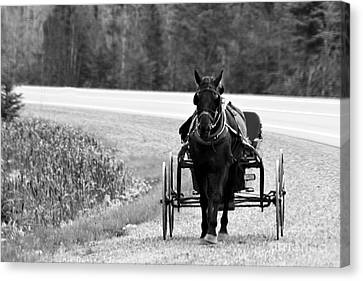 Canvas Print featuring the photograph Horse And Buggy by Marjorie Imbeau