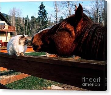 Horse And Cat Nuzzle Canvas Print by Thomas R Fletcher