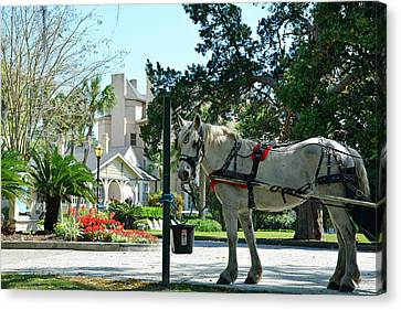 Horse And Jekyll Lsland Club Hotel Canvas Print by Bruce Gourley