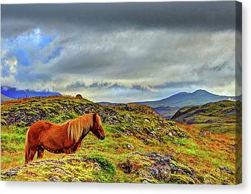 Canvas Print featuring the photograph Horse And Mountains by Scott Mahon