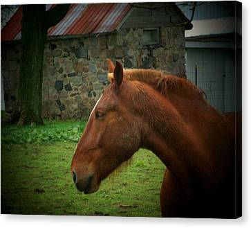 Horse And Shed Canvas Print by Michael L Kimble