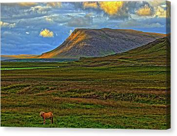 Canvas Print featuring the photograph Horse And Sky by Scott Mahon