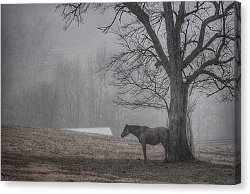Canvas Print featuring the photograph Horse And Tree by Sumoflam Photography