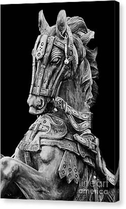 Horse  Canvas Print by Charuhas Images