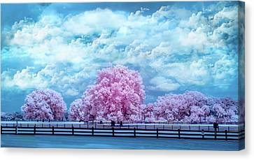 Canvas Print featuring the photograph Horse Country In Pink by Louis Ferreira