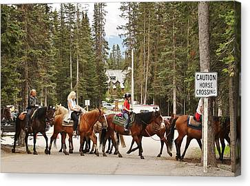Canvas Print featuring the photograph Horse Crossing by Al Fritz