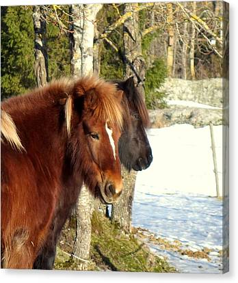 Horses With Peace In Their Mind  Canvas Print by Hilde Widerberg