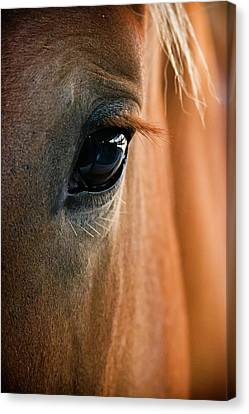 Abstract Equine Canvas Print - Horse Eye by Adam Romanowicz