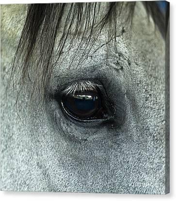 Horse Eye Canvas Print by John Greim