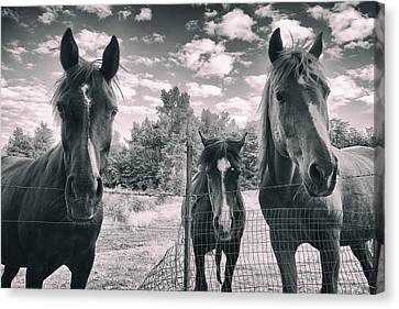 Horse Family Canvas Print