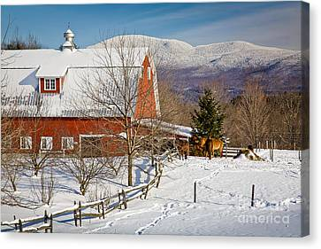 Horse Farm And Mount Mansfield Canvas Print by Susan Cole Kelly