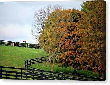 Canvas Print featuring the photograph Horse Farm Country In The Fall by Sumoflam Photography