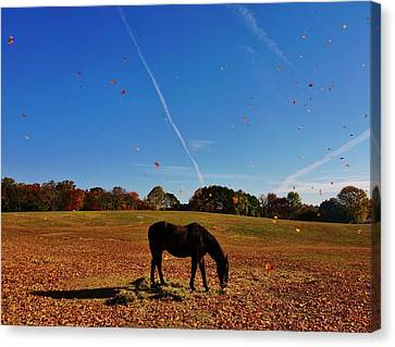 Horse Farm In The Fall Canvas Print by Ed Sweeney