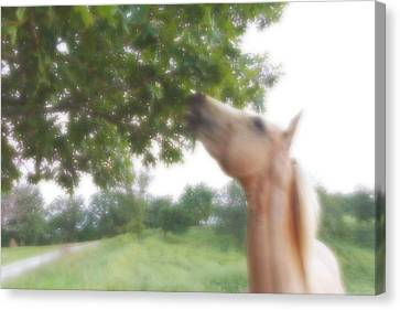 Canvas Print featuring the digital art Horse Grazes In A Tree by Jana Russon