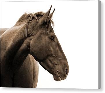 Horse Head Study Canvas Print by Heather Swan