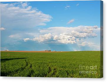 Horse Heaven Storm Canvas Print by Mike Dawson