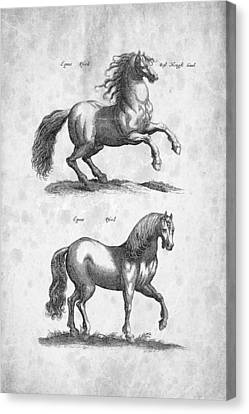 Horse Historiae Naturalis 1657 Canvas Print by Aged Pixel