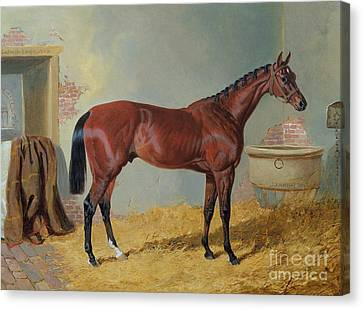 Bay Horse Canvas Print - Horse In A Stable by John Frederick Herring Snr